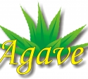 Agave travel agencja